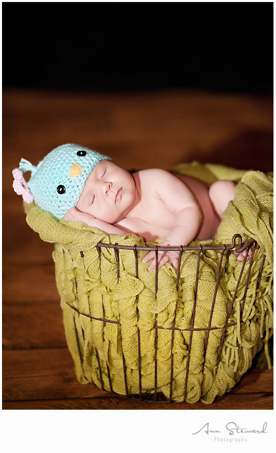 Davenport Newborn Photography
